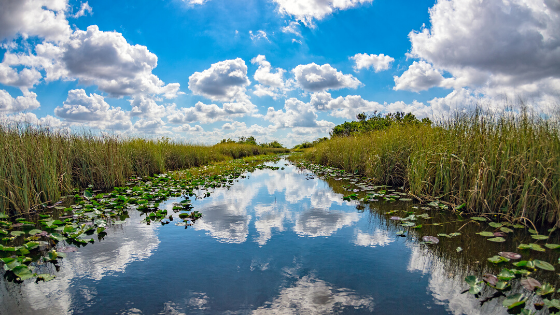 View of the Everglades' river of grass